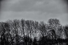 In the bleak Midwinter (scottprice16) Tags: uk trees winter england wet rain lancashire midwinter clitheroe 2014 canong1xmark2