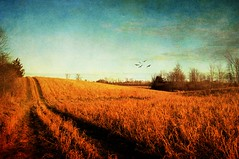 An Afternoon Walk (Jolynn's Photography) Tags: field landscape december farmland