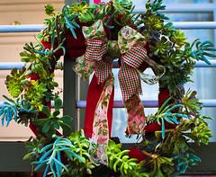 Merry Christmas to all! (julesnene) Tags: christmas holidays decoration wreath ribbon julesnene canonef35mmf14lusmlens succulentwreath juliasumangil canon7dmarkii