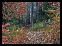 Wednesday morning walk....October 2014 (bevcraigwhite) Tags: ontario october explore 2014 bevcraigwhite fallcolournearrailtrail