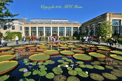 Waterlily Court Center Pool Display (1st of 8 Part Series) at Longwood Gardens PA (takegoro) Tags: flowers plants nature gardens waterlily pennsylvania conservatory square gardens pad lily longwood kennett