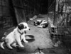 (floydianalost) Tags: brazil blackandwhite bw dog pet pets white black art dogs nature branco brasil loving photoshop dark fun photo artwork flickr all foto sad emotion photos amor picture like pic photographic preto follow pinhole cachorro cachorros moment myjob pretoebranco mylife peb bew likes amador mylove mypet followme coment lovedogs lovedog lovephoto picpet followyouback