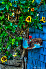 Crystal Cove - Cottage Mailbox - Tonemapped_6115 (www.karltonhuberphotography.com) Tags: flowers tree mailbox rust colorful pretty quiet unique cottage vivid peaceful crystalcove historic rusted restored romantic southerncalifornia quaint beachfront beachcottage oceanfront crystalcovestatepark historicsite 2015 woodsiding tonemapped vacationspot creativeeffect karltonhuber
