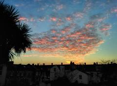 Pink-Grey Cloud Sunset (Climate_Stillz) Tags: sunset sky sun tree london clouds garden rooftops southlondon pinkclouds