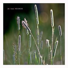 Hierbas (Jabi Artaraz) Tags: light naturaleza nature natura zb argia hierbas euskoflickr superaplus aplusphoto jartaraz belarrak