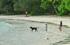 New Caledonia Ile des Pins dog and girls (sapphire_rouge) Tags: woman dog beach pool girl animal coral island polynesia lagoon resort teen poolside reef schoolgirl newcaledonia iledespins
