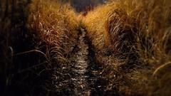 Path (Michael St. Jean) Tags: ri autumn grass gold path trail rhodeisland fujifilm landcape cranston xm1 27mm pawtuxetriver