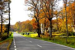 _DSC1201 (andoni.guridi) Tags: autumn fall spain otoño navarra 2014 basaburua