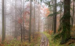 Misty Woodland Track (jactoll) Tags: light mist misty fog woodland landscape woods nikon track mood broadway foggy cotswolds worcestershire nikkor d610 mistywoods 1635mmf4 jactoll nikonfxshowcase