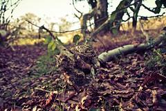 Oakley Woods Dec 2014 (14 of 28) (simmophotos) Tags: uk england nature woodland woods warwickshire