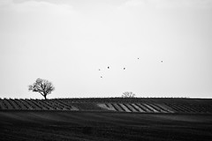 (Alex Ripoche) Tags: new travel light sky bw white black france tree love contrast canon landscape grey flickr paradise noir view lumire background clam ciel moment paysage fr arbre blanc paradis oiseaux mouvement abigfave anawesomeshot flickrtravelaward