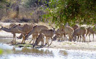 Botswana Hunting Safari 14