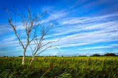 The Moody Marsh (C.G.Photos) Tags: norfolk marsh potterheigham