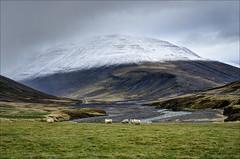 Northern Iceland 3 [Explored] (Jen St. Louis) Tags: mountains landscape iceland sheep pasture northiceland nikon1685mm nikond7000 jenstlouisphotography wwwjenstlouisphotographycom