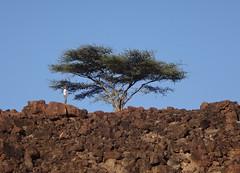 Kenia. Loyangalani. Acacia (escandio) Tags: kenia 2014 loyangalani viajealturkana