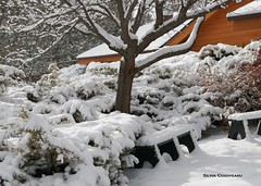 December 28, 2014 - Fresh snowfall coats a yard in Thornton. (Silvia Cosoveanu)