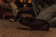 andiputthatonkaykay (9 of 17) (drecoldchane) Tags: weed raw nashville balloon tay dos hamster hamsters fader ryry jonha ryanna tylerthecreator
