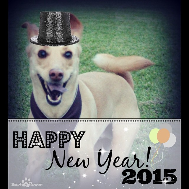 Happy New Years everyone!🎉🐾 wishing u a happy, healthy & tail-waggin New year! #2015 #Bark4Green #woof