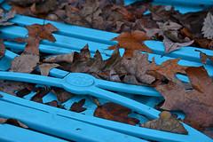 The Old Blue Bed Frame (BKHagar *Kim*) Tags: blue floral metal design bed metallic frame headboard deco bkhagar