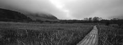 (fukukawa takashi) Tags: film monochrome japan 400tx hakone xpan