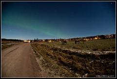 Northern Lights January 2015 (mmoborg) Tags: sweden sverige northernlights auroraborealis norrsken northernlight mmoborg