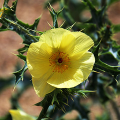 Look, but Don't Touch (studioferullo) Tags: park light arizona plants plant flower texture nature fleur beauty yellow rural garden circle botanical outdoors leaf pretty natural tucson country flor sunny round serene wildflower fiore