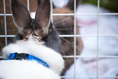 BFF II (divi333) Tags: rabbit bunny bunnies ferrara rabbits conigli coniglio 2016 aae conigliando