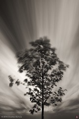 Tree, Sky and Clouds (ceeenbee) Tags: envisionography monochrome topazdenoise topazbweffects
