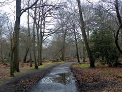 Burnham Beeches 062 (Peter O'Connor aka anemoneprojectors) Tags: 2016 buckinghamshire burnham burnhambeeches england kodakeasysharez981 nationalnaturereserve naturereserve outdoor path plant siteofspecialscientificinterest sssi track tree woodland z981 kodak uk