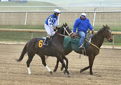 2016-01-08 (17) r1 Jevian Toledo on #6 Sundaes Baby (JLeeFleenor) Tags: photos photography md marylandracing marylandhorseracing laurelpark sport sports jockey   jinete  dokej jocheu  jquei okej kilparatsastaja rennreiter fantino    jokey ngi horses thoroughbreds equine equestrian cheval cavalo cavallo cavall caballo pferd paard perd hevonen hest hestur cal kon konj beygir capall ceffyl cuddy yarraman faras alogo soos kuda uma pfeerd koin    hst     ko  bay outside outdoors maryland