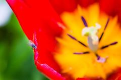 Minuscule (Guill_B) Tags: flower macro fleur se sude landskrona skneln