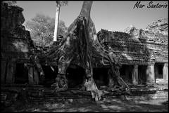 templo preah khan (Mar Santorio) Tags: d50 temple nikon cambodia siemreap templo preahkhan camboya