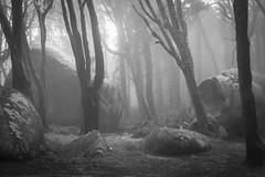 Rocks in the Mist (christophercosgrove) Tags: park mist art leaves rock forest moss rocks quiet sintra fine mystical