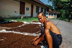 Tobacco Farmer & Cured Tobacco (AdamCohn) Tags: adamcohn indonesia jogja jogjakarta yogya yogyakarta cured farmer man tobacco wwwadamcohncom