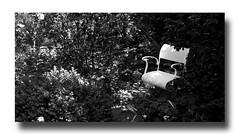 - white chair - (Jac Hardyy) Tags: light white black garden licht chair silence bushes garten schwarz stuhl stille weis ruhe gebsch bsche
