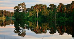 A dutch forest,early in the morning. (alex.vangroningen) Tags: morning trees lake reflection green water dutch clouds forest early goldenhour sereen