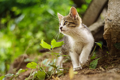Little cat (adnanefs) Tags: green nature zeiss kitten small kitty carl playful planar