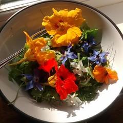 Garden Salad (the justified sinner) Tags: mobile garden square salad phone mint lettuce squareformat fennel borage chard narsturtium instagramapp uploaded:by=instagram