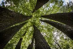 Arbres (Paul Leb) Tags: boucherville qubec canada parcdelafrayre arbre rbol tree