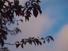 Sunset 20140918 (caligula1995) Tags: 2014 clouds plumtree sunset