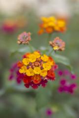 _MG_1631 (Arthur Pontes) Tags: parque flores flower verde green primavera nature spring natureza small flor pequeno colorido