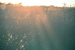 Sunrays (Teis Auf) Tags: wood blue trees sunset red sky cloud sun lake building tree water beautiful field set sunrise denmark happy ray rays rise build danmark hdr cloudporn roskilde skyer bakke skyes hedeland skibakke