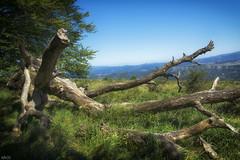 Salto del Nervión (Maocfoto) Tags: españa naturaleza spain alava vasco euskadi paisvasco araba cautivadora