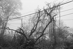 (The-Floyd) Tags: leica film nature fog analog blackwhite kodak trix vietnam m6 trix400