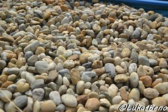 Gravel (LukasBeno) Tags: road old wallpaper brown white abstract black color detail macro texture beach nature rock horizontal stone closeup river garden concrete outdoors construction day pattern view floor natural outdoor path decorative background small group gray decoration smooth large rocky ground pebbles surface cobblestone pebble ornament zen round material shape gravel textured