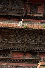Basantapur, Kathmandou (Bertrand de Camaret) Tags: voyage wood travel nepal sculpture man art window grass vertical architecture asia ngc kathmandu asie tradition bois homme fenetre herbe topi nationalgeographic kathmanduvalley durbarsquare basantapur katmandou 2013 bertranddecamaret desherber