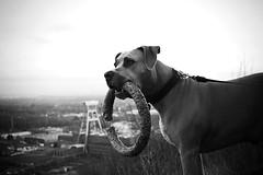 (ninastimac) Tags: dog dogs hund nrw hunde ruhrpott