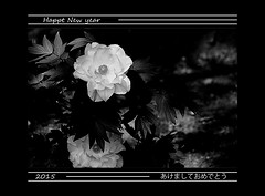 Rose (karakutaia) Tags: sun tree love nature japan paper temple tokyo heart afotando flickraward flickrglobal allbeautifulshotsandmanymoreilovenature flowerstampblackandwhite transeguzkilorestreetarturbanagreatshotthisisexcellentcontestmovementricohgxrserendipitygroupbluenatureicapturecardjapanesepapercardflickraward5jtrasognoerealtabstractelementsorganizersimplysuper