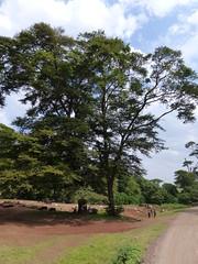 Shimab South, Taveta South and Nairobi South 2015 (Cookswell Jikos) Tags: africa castle oven kenya south safari charcoal firewood teak grogans shimba cookstoves foretry jikos tavate cookswell whyilovekenya