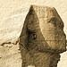 SphinxHead